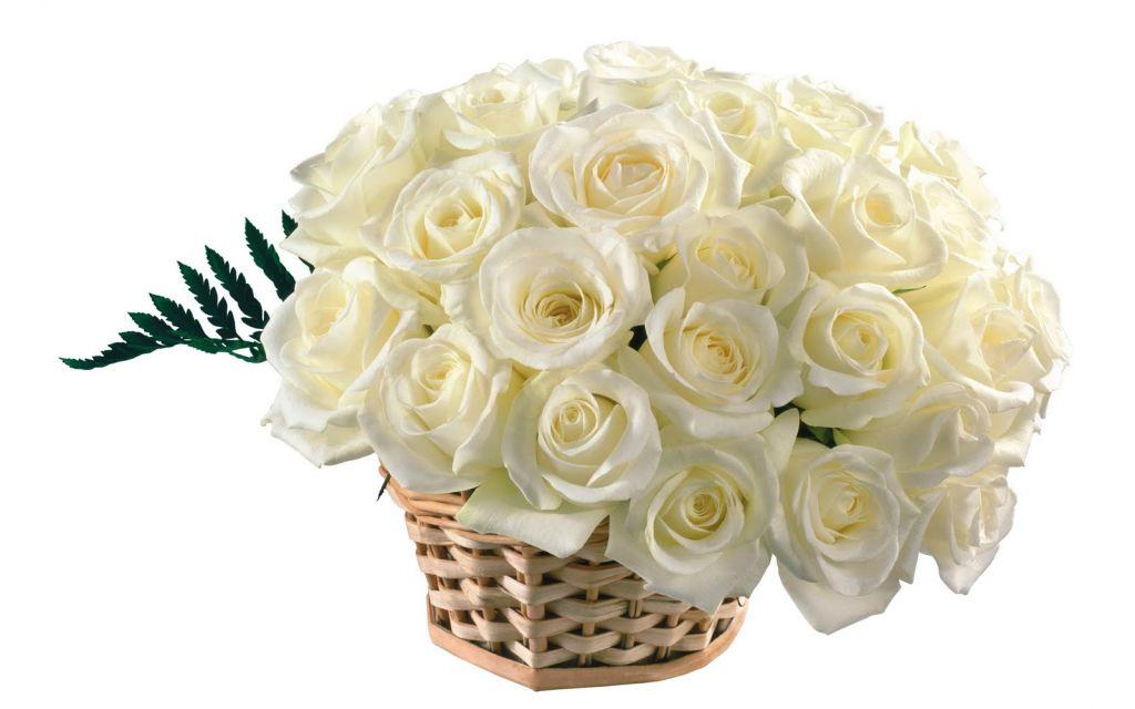 Картинки цветов для поздравления 7